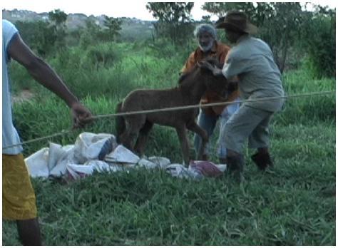 http://l-humanite.cowblog.fr/images/Poulainpoussepouretrechargedansuncamionphoto3.jpg
